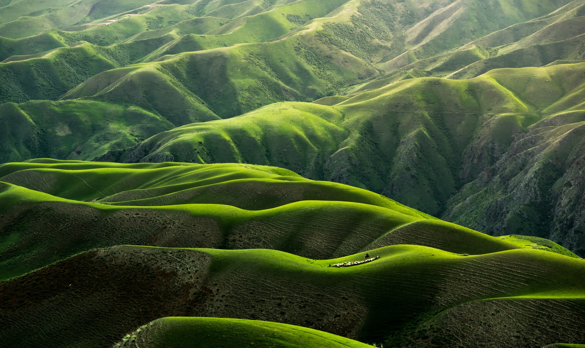 Lush green mountains. Qingbao Meng