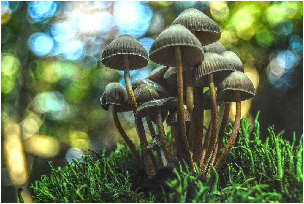 mushroom community,