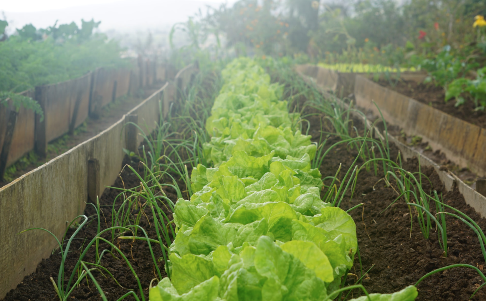 The Terra Guide To Community Supported Agriculture Image