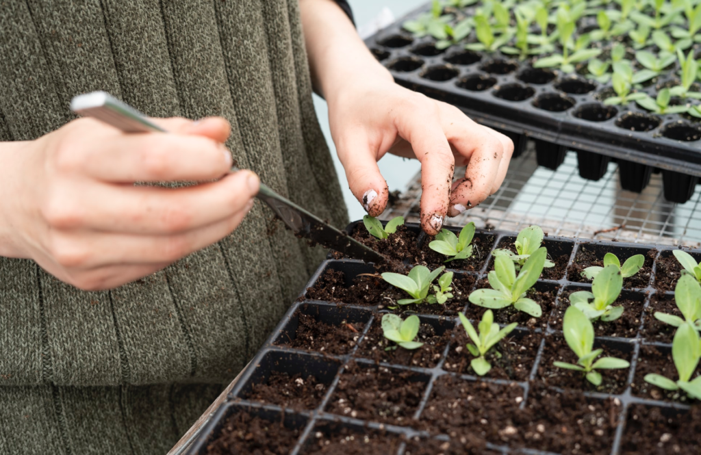 How To Start A CSA: Join a Growing Revolution Image