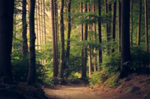 Trees Remove CO2