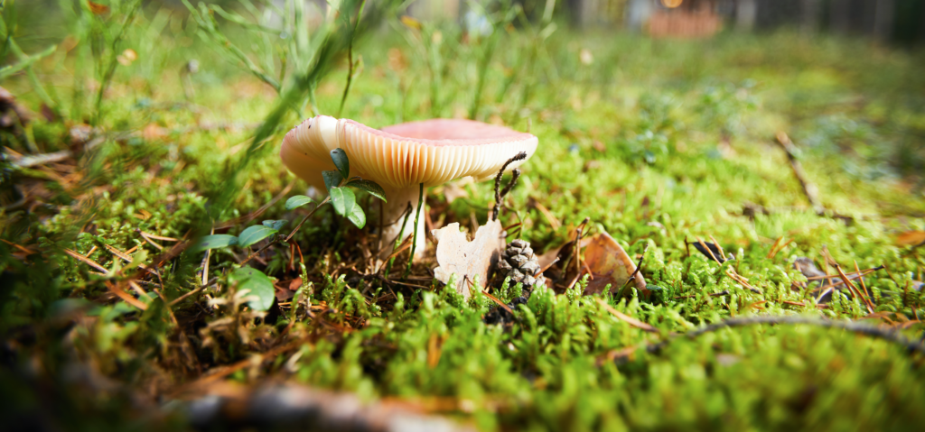 How Mushrooms Can Clean Up Oil Spills Image