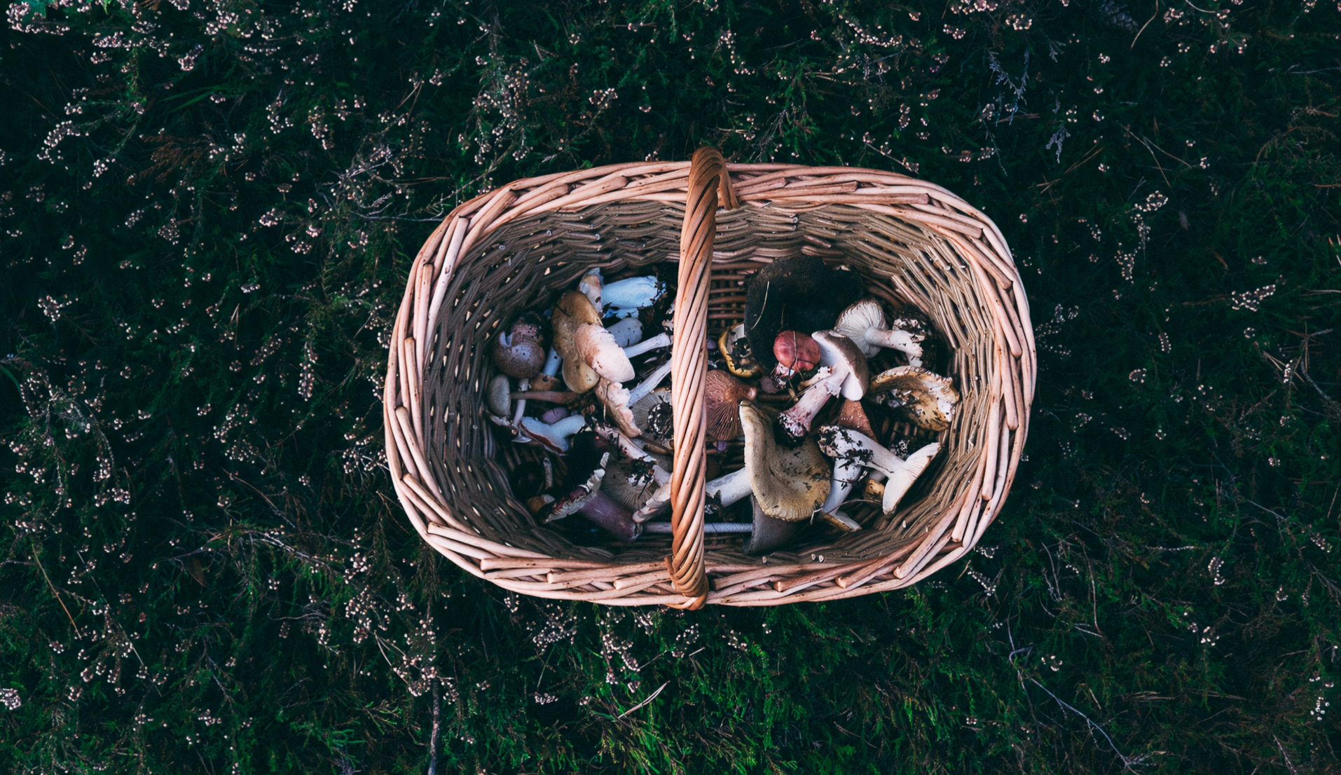 Foraging For Food:  Take charge of what you eat and where it comes from. Image