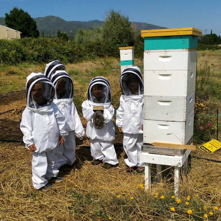 Beekeeping Near Me. Ever wonder how to raise chickens or how to build a chicken coop? Beekeeping requires responsibility & serious dedication