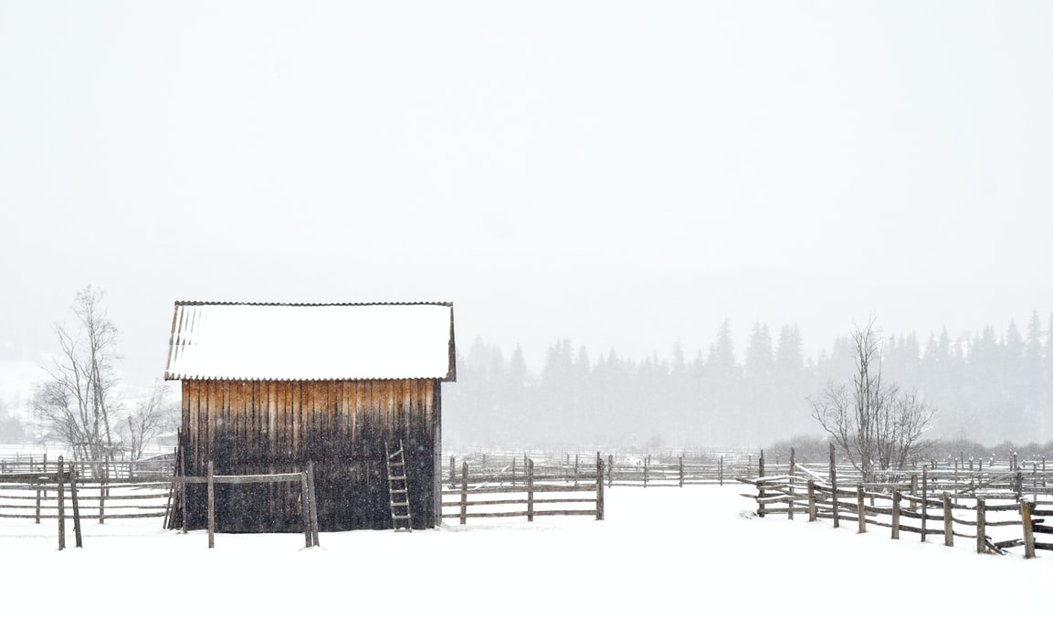 Artist, work, museum ,Winter food is so important in Lebanon, house in field covered in snowright now! Ciprian Pardău