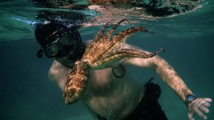 My Octopus Teacher Netflix Series is about a filmmaker who forges an unusual friendship with an octopus living in a South African kelp forest.