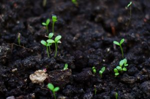 Soil conservation is preventing loss of the top layer of soil, keeping it fertile and reducing the effects of chemical soil contamination. Dark soil growing clovers