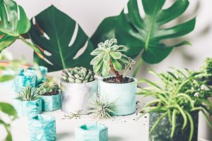 Does music help plants grow? This is something that Courtney Warwick answers everyday when she raps to her plants. Planting succulent plant in the new marbled color planter, turquoise blue or green mint color, the process of creation of the indoor garden