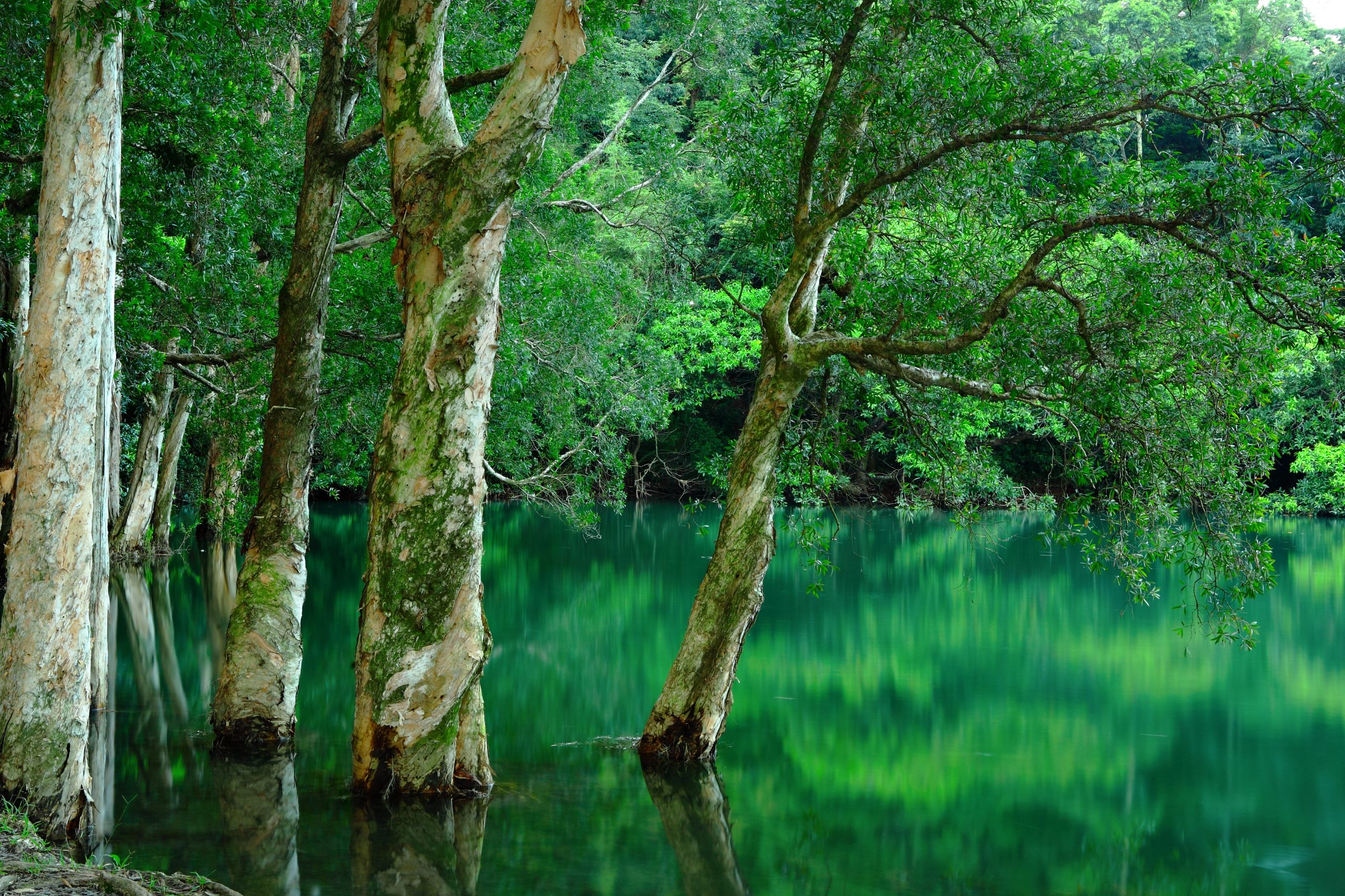 Sit Down For Tea With the Jane Goodall of Trees – Diana Beresford-Kroeger Image